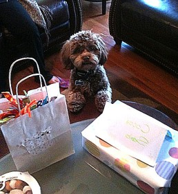 Puppies as gifts